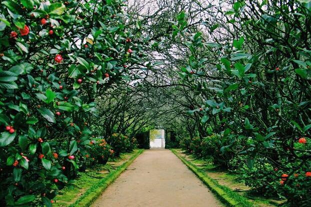 Nhà vườn cây cảnh Giang Thanh