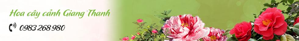 Hoa cây cảnh Giang Thanh