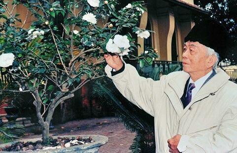 Cây hoa bạch trà của đại tướng Võ Nguyên Giáp