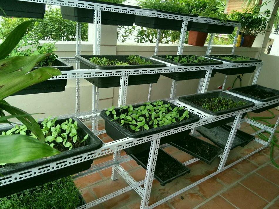 Kệ trồng rau sạch bậc thang làm bằng thép V lỗ