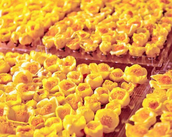 Trà hoa vàng